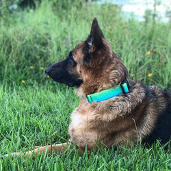 Check out our new pet collars. They come in 4 sizes and are heavy duty with the top of the line buck
