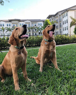 Puppy play dates are only the best when