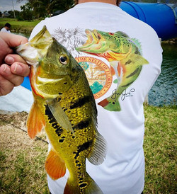 A great day for peacock bass! Anyone els