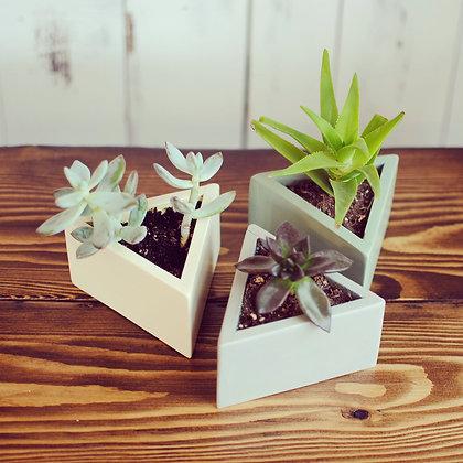 Succulent triangle planters