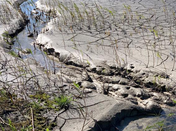 sludge lagoon.jpg