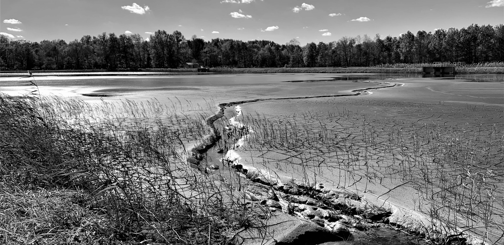 sludge lagoon black and white.jpg