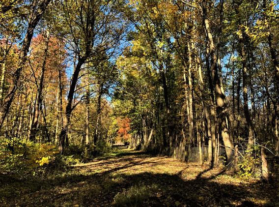 fall woods 2.jpg