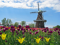 Holland Tulip Time