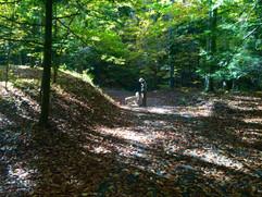 Walk in the Summer Woods