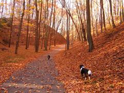 Walk in the Autumn Woods.jpg