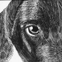 Animal Scratch Art