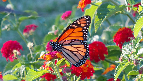 Susan Brockmeier. I took this butterfly pic out in nature, a beautifu symbol for transfromation.
