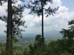 Belize Jungle Tour