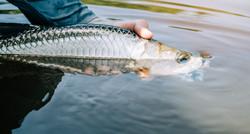 Lagoon fishing 6 (1)