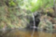 Cockscomb Jungle Hike