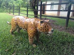 Jaguar Spotting, Belize Nature Hike