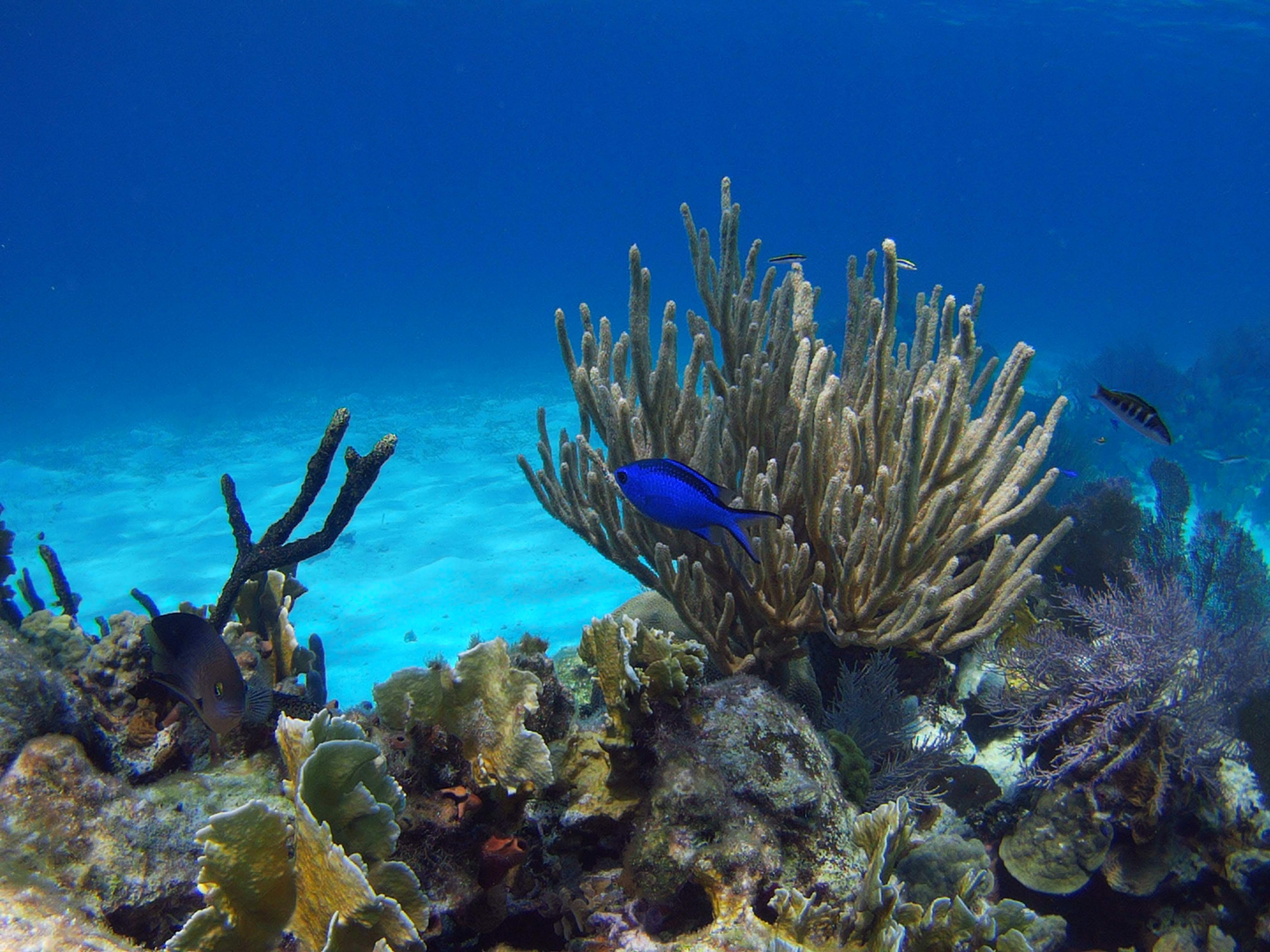 Belize Marine Adventures