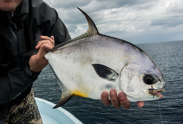 Belize permit fishing