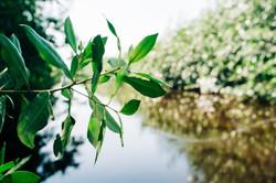 Belize Mangroves