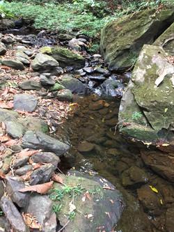 Jungle Hike from Hopkins