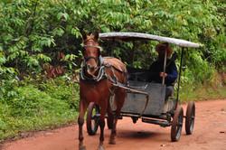 Belizean farmer