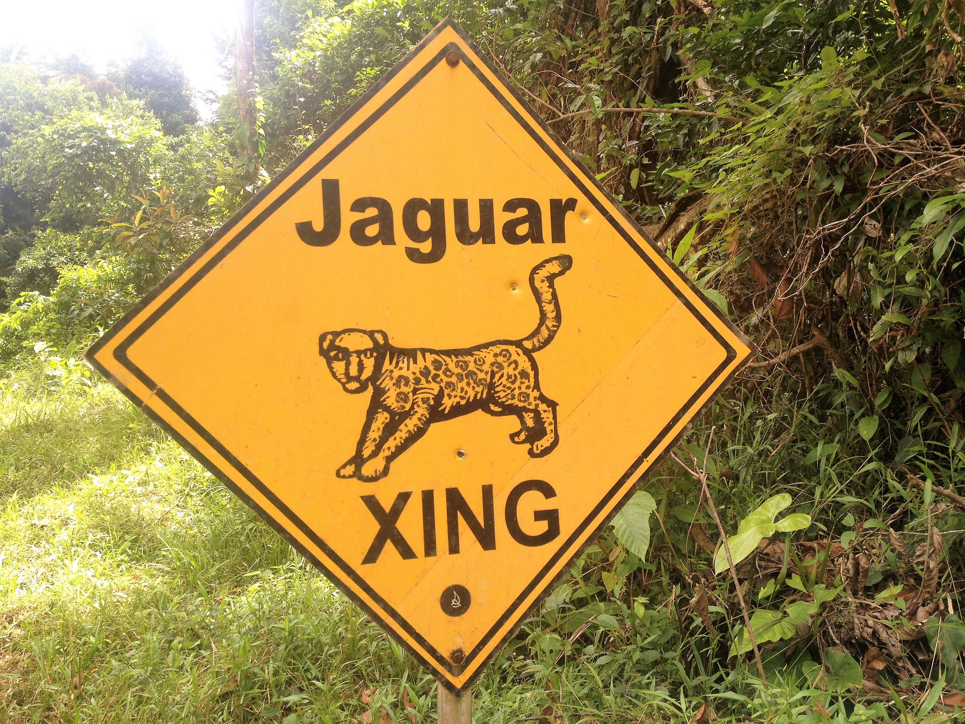 Jaguar Crossing, Belize Jungle Hike