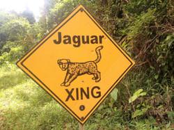 Jaguar Crossing, Belize Jungle Hike