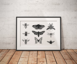Insects Series One