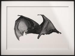 Flying Fox/Bat