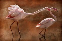 Flamingo Fight Club