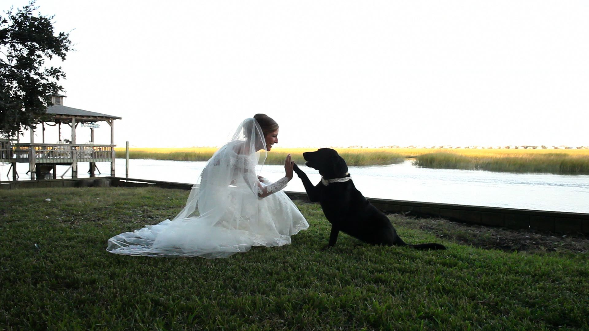 bride dog
