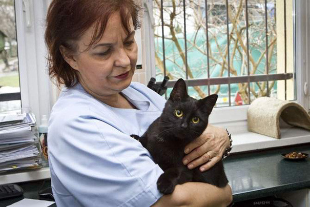 gato-enfermero-10.jpg