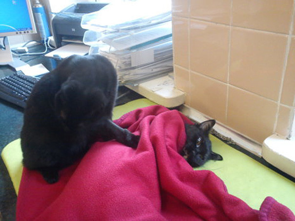gato-enfermero-7.jpg