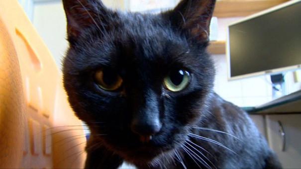 gato-enfermero-9.jpg