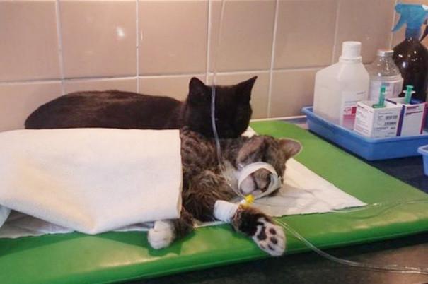gato-enfermero-2.jpg
