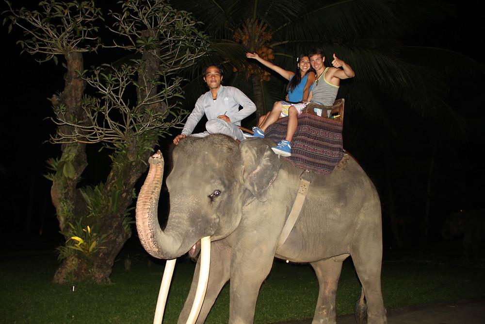safari-park-d1-3.jpg