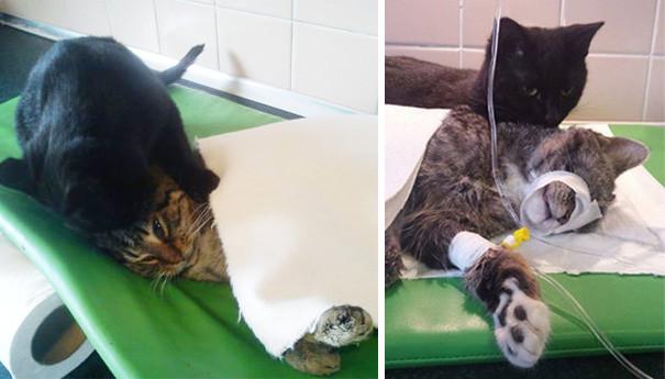 gato-enfermero-4.jpg