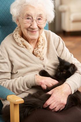 elder&cat