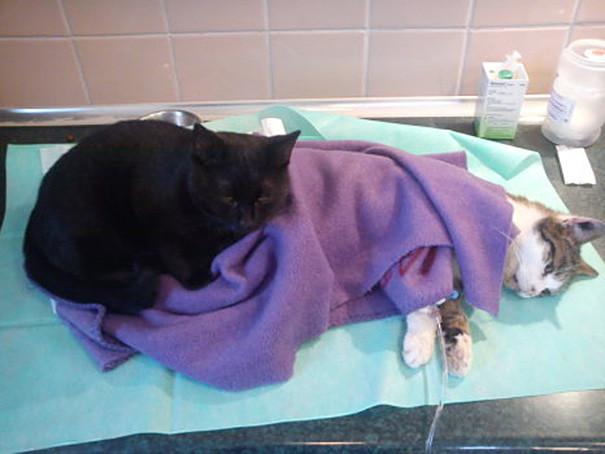 gato-enfermero-3.jpg