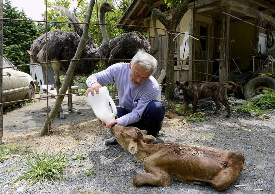 guardian-fukushima-abandoned-animals-naoto-matsumura-9.jpg