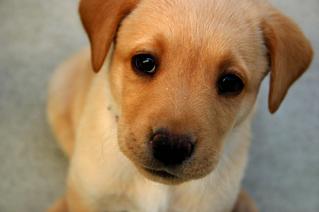 Sostener la mirada con nuestros perros ofrece beneficios para ambos