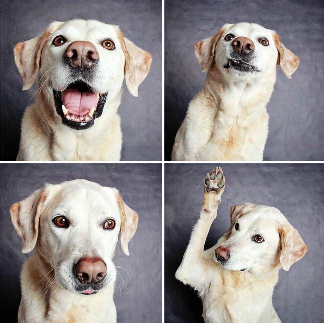 Dogs14.jpg