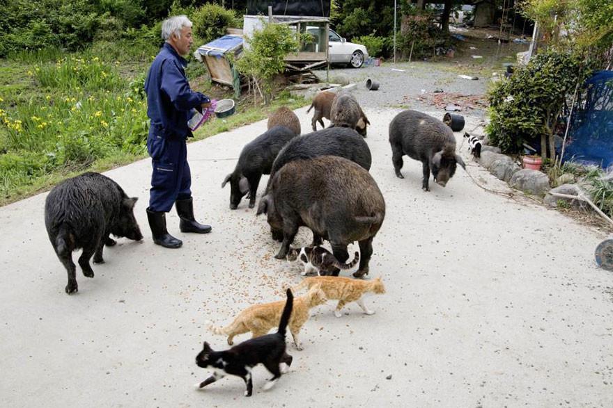 guardian-fukushima-abandoned-animals-naoto-matsumura-10.jpg