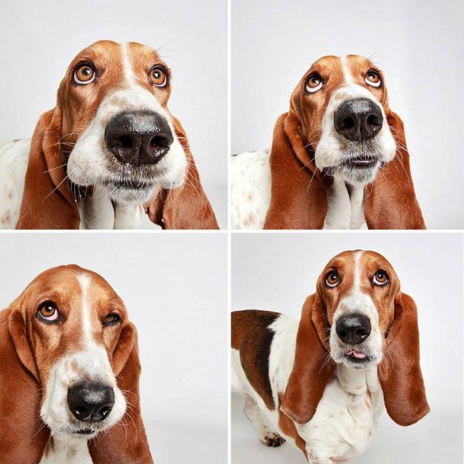 Dogs6.jpg