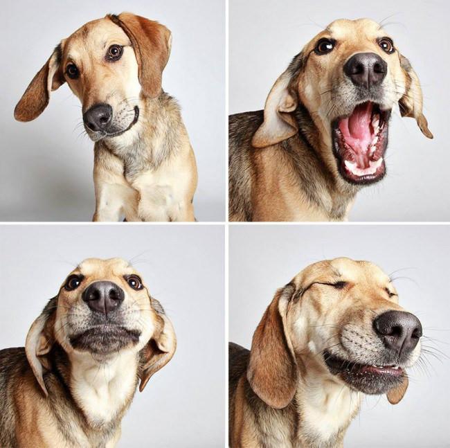 Dogs12.jpg