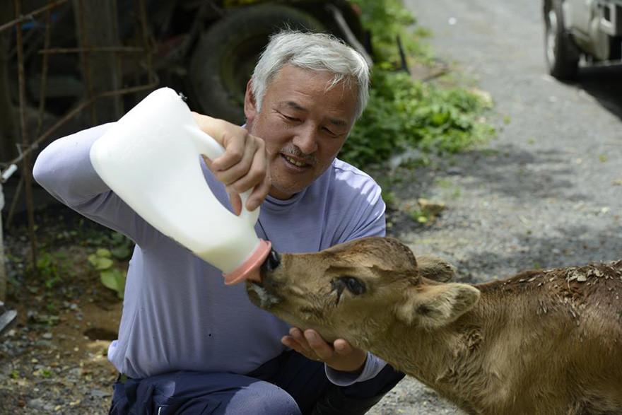 guardian-fukushima-abandoned-animals-naoto-matsumura-1.jpg