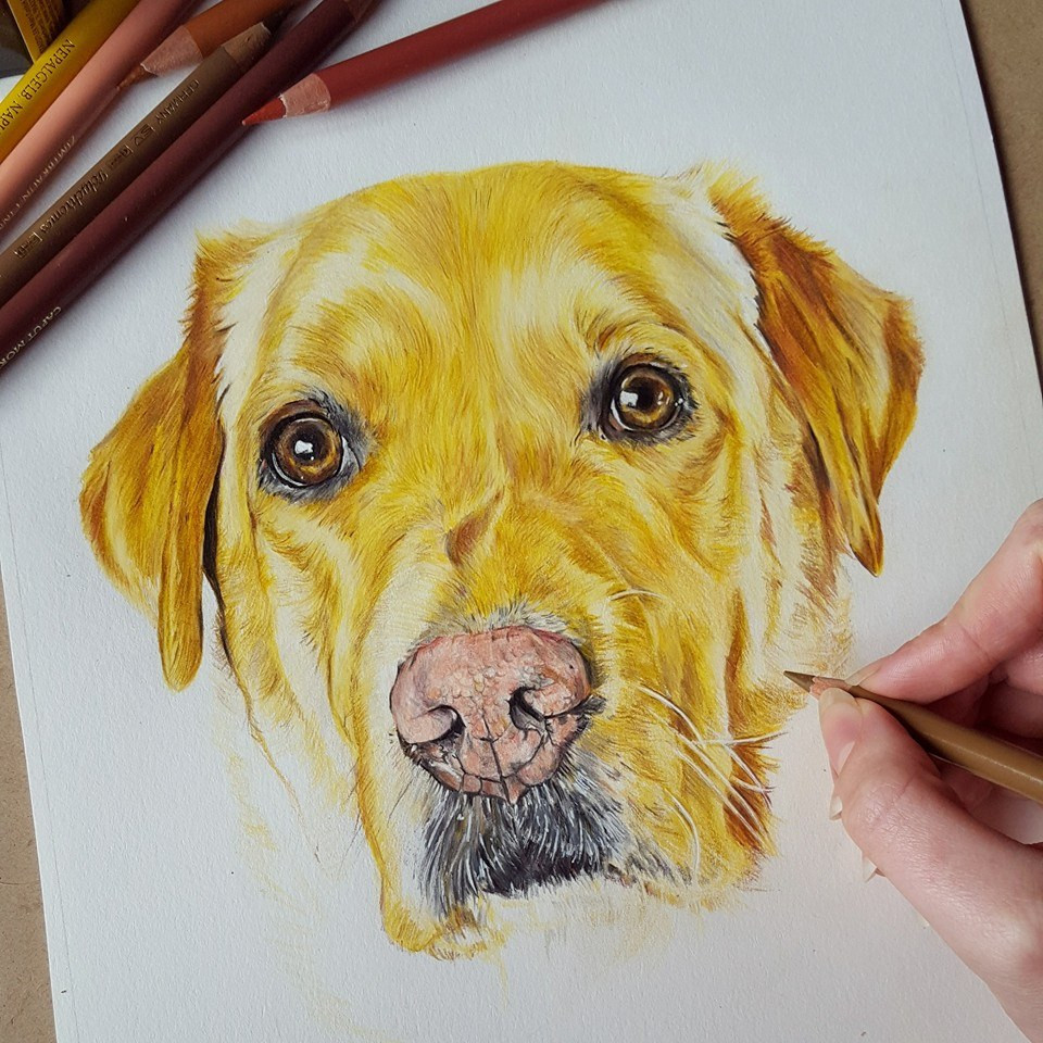 Working on Thor the Labrador