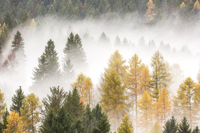 Brume d'autunno
