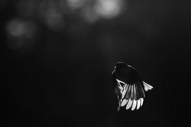 Luce sulle ali