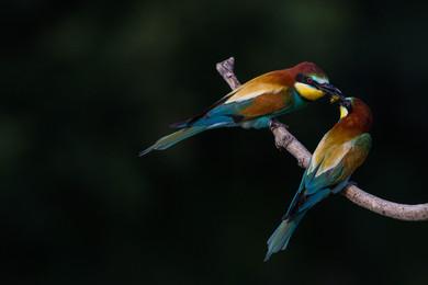 L'arcobaleno sulle ali