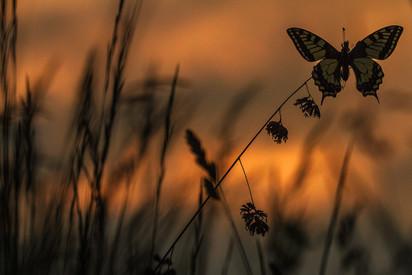 Bellezza all'alba