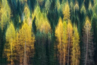 La danza del bosco