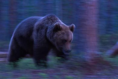 La notte dell'orso