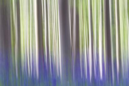 Linee nel bosco
